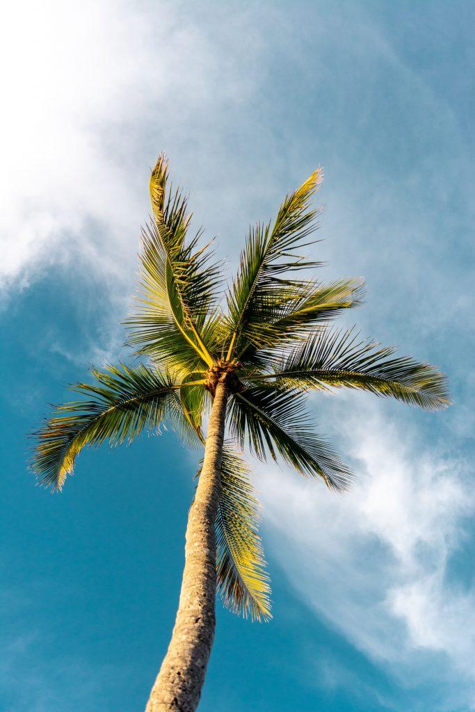 Kokosnussbaum mit Wolken