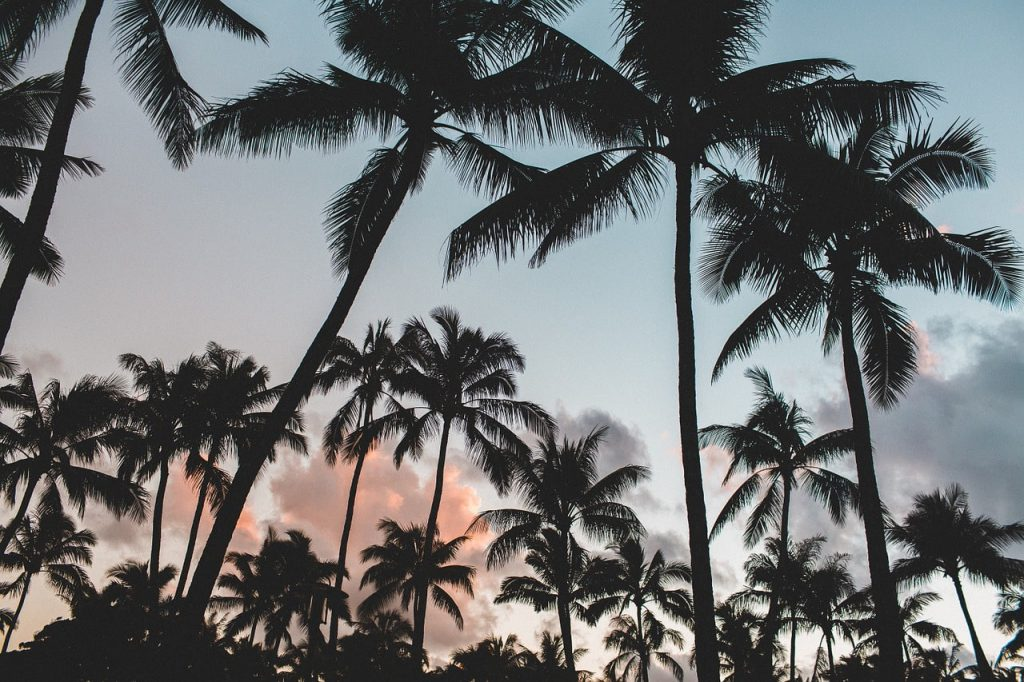 Kokosnuss Palmen