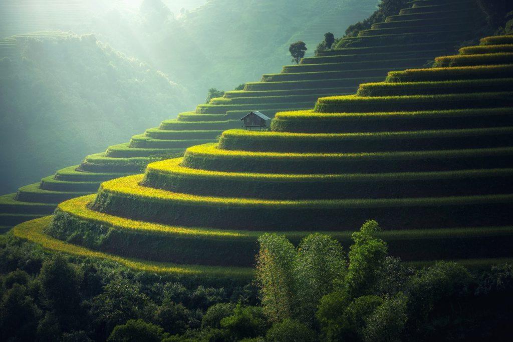 Reisplantage Thailand