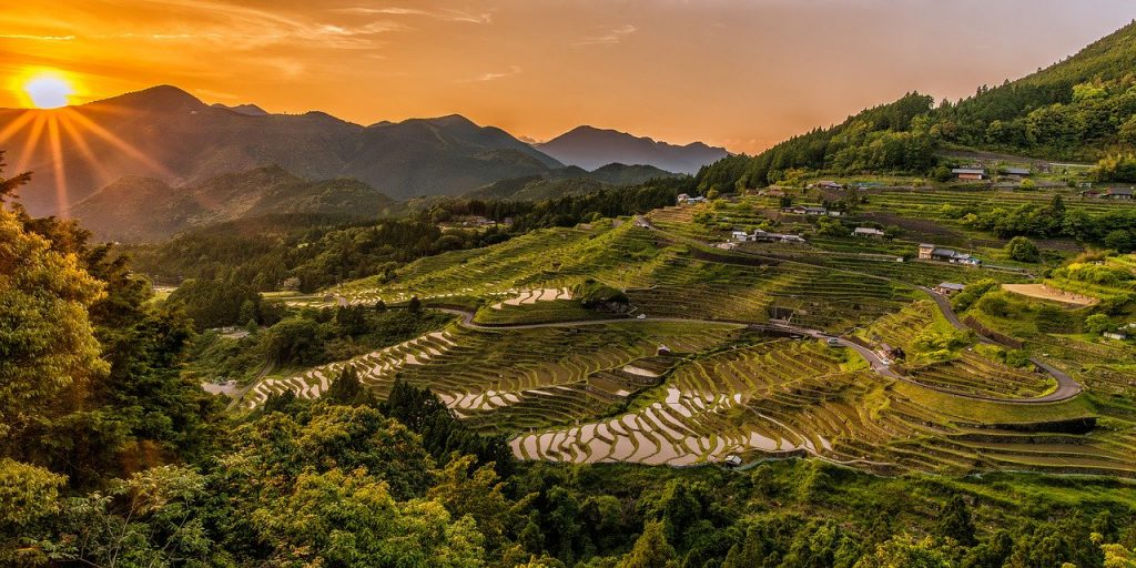 Reislandschaft